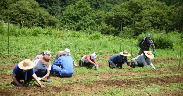 危機的な日本の漆を守るため漆の森づくりにご支援ください